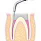 Endodontics/E7 -varios